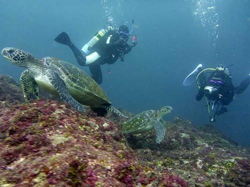 アオウミガメもみんなで見てみて
