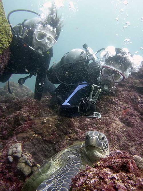 岩の隙間からこちらを伺うアオウミガメ