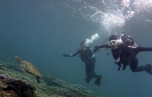 アオウミガメと一緒に泳ぎ