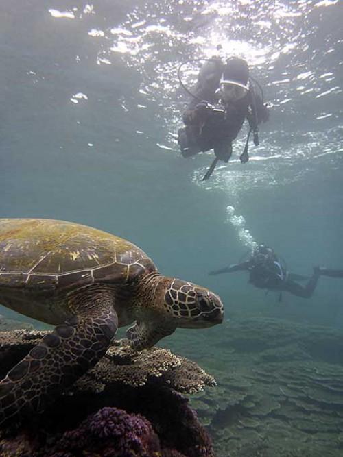 ゆっくり近づきアオウミガメを撮ってもみたり