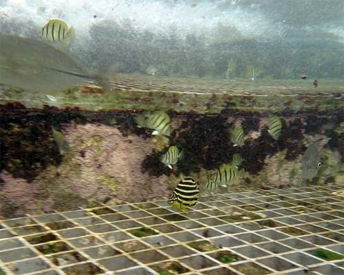 浅場に魚はたくさんいたり