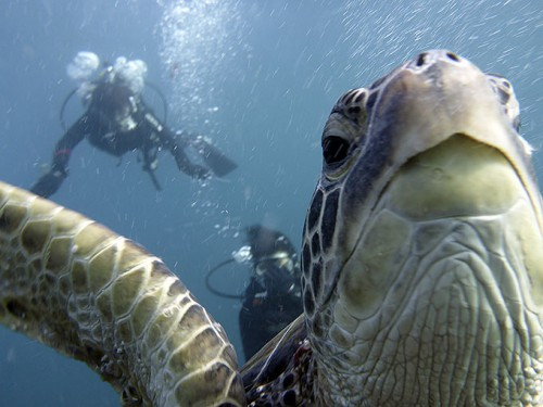 カメと一緒に体験ダイビング