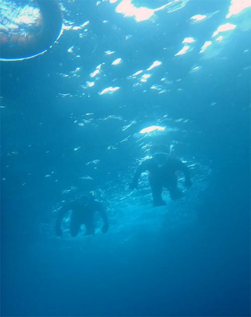 みんなで泳いでウミガメ探し