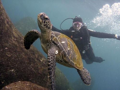 アオウミガメと一緒に泳げたり