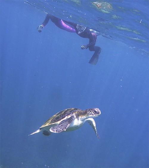 静かに近づきゆっくりウミガメ見られたり