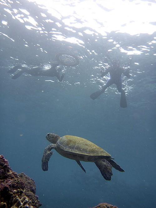 底土の海でたくさんウミガメ見られたり