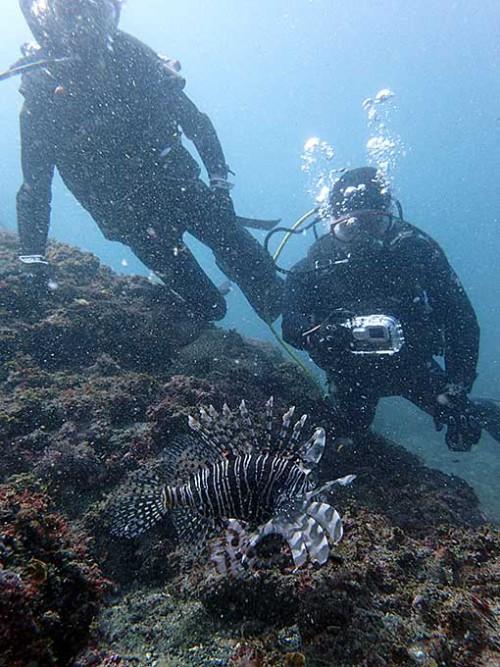 水底行けばハナミノカサゴもおりました