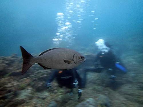 大きな魚も横切ってって