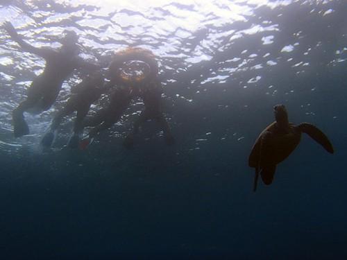 今日も沖でてアオウミガメを見てみたり