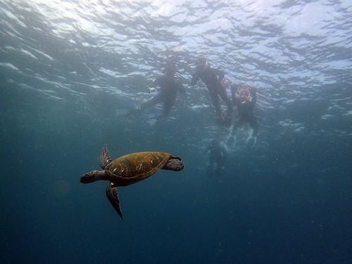 泳ぐカメを上から見られたり