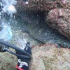 まとまった雨も降っていた八丈島、強めのうねりの八重根で体験ダイビング
