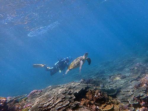 アオウミガメもたくさん見たり
