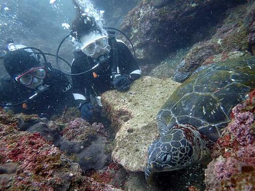 大きめのカメは水底付近で休憩中