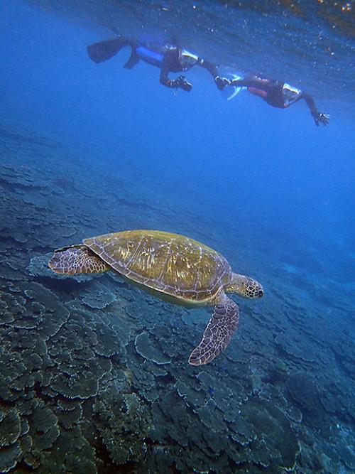 大きなウミガメゆっくり周りを泳いでて