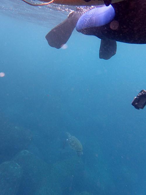 今日も近場でウミガメ見られ