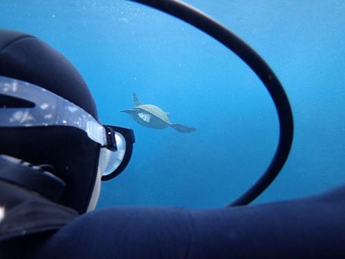 目の前カメが泳いでいって