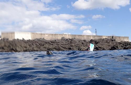 水面顔出すアオウミガメ