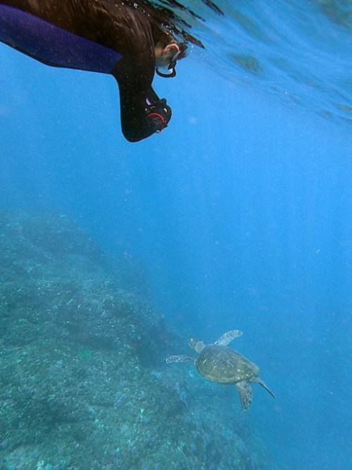 泳ぐウミガメ撮ってもみたり