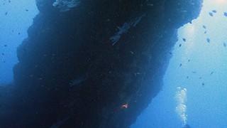時折強めの雨も降る八丈島、時間と共にうねりも入る八重根でダイビング