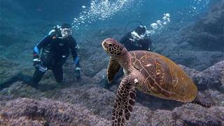 秋晴れ広がる八丈島、若干うねりの残る八重根で体験ダイビング