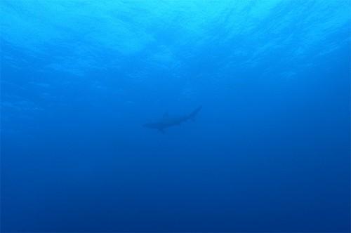 頭上をサメが泳いでいって