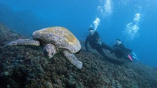 青空も多くなってきていた八丈島、うねり残りの八重根で体験ダイビング