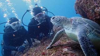 グズつく天気の八丈島、穏やかになっていた八重根で体験ダイビング