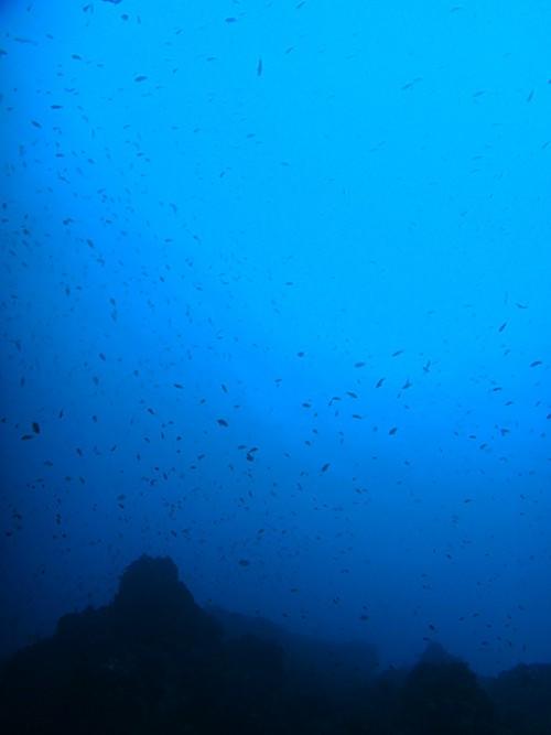 魚はたくさん海の中