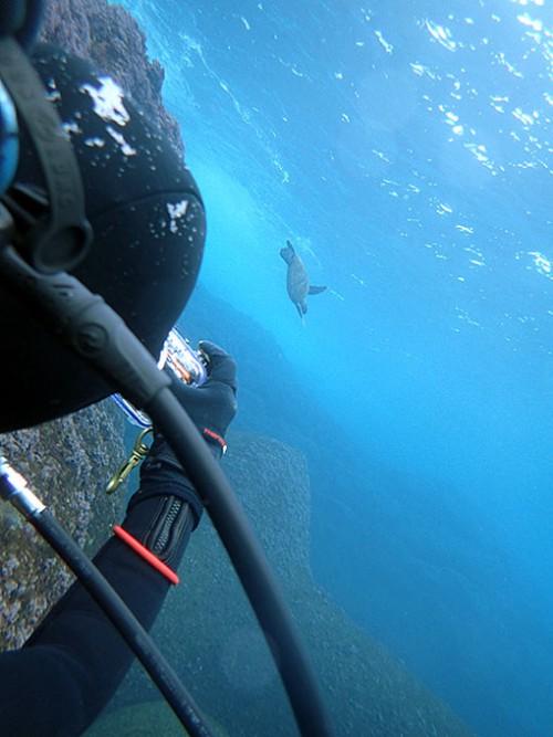 遠くに小さいカメが泳いでいたり