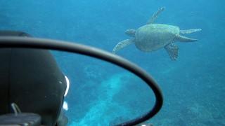 青空次第に多くもなる八丈島、うねりはあるが底土で体験ダイビング