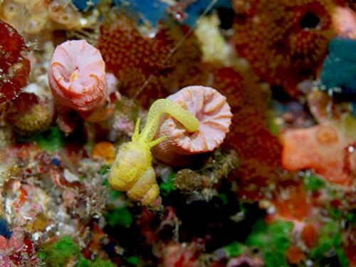 黄色い貝がなんかびょーんとなんか伸ばしてたり