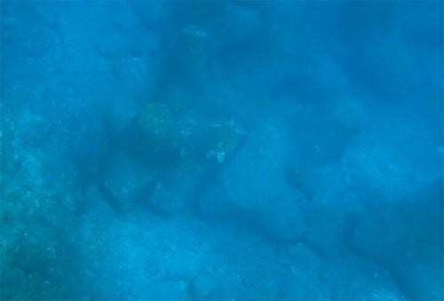 泳ぐカメを上から見たり