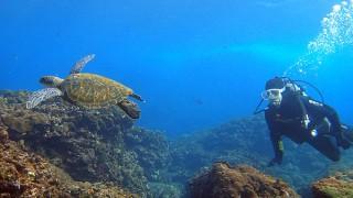 日差しもあって暖かな八丈島、弱めのうねりもある八重根で体験ダイビング