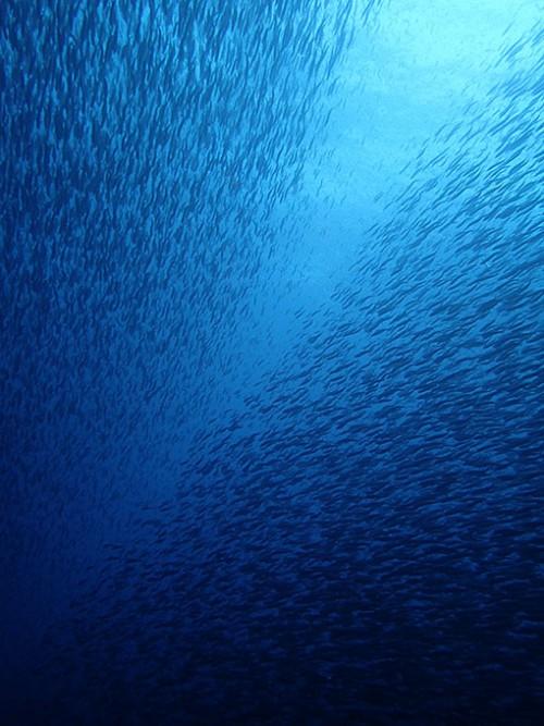 左右に魚の壁ができ