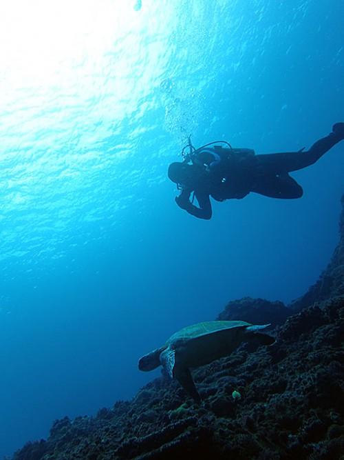 カメを撮りつつ沖まで泳ぎ
