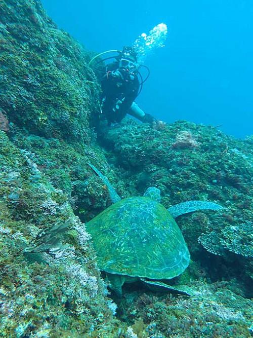 根上で休むアオウミガメ