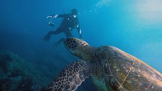気持ちの良い青空広がる八丈島、穏やかな八重根で体験ダイビング