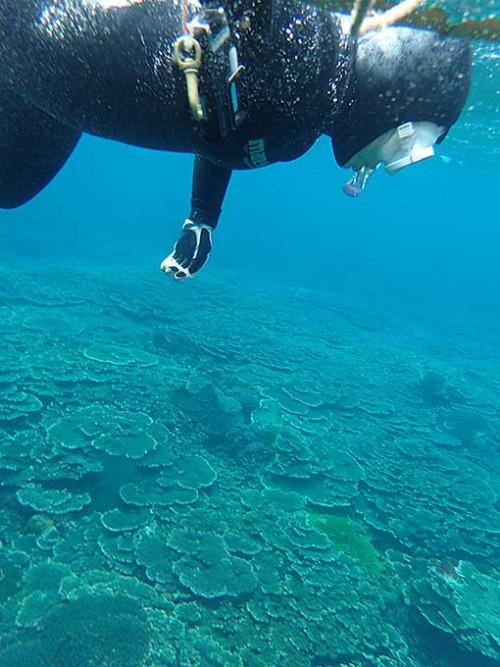 広がるサンゴを見ながら泳いでいって