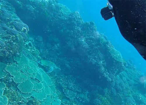 岩陰で休んでいたアオウミガメ