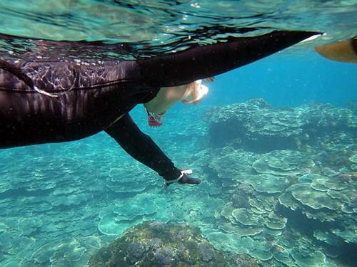 サンゴの広がる底土の浅場