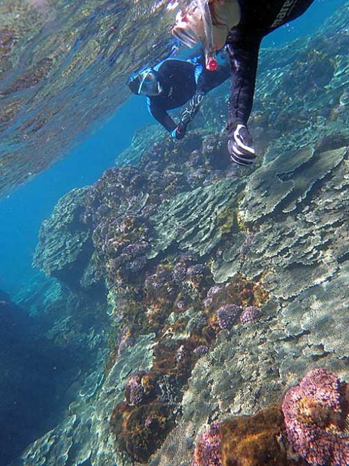綺麗なサンゴを見ながら泳いでいって