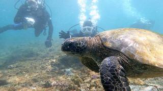 カラッと爽やかな青空広がる八丈島、うねり強めの底土で体験ダイビング
