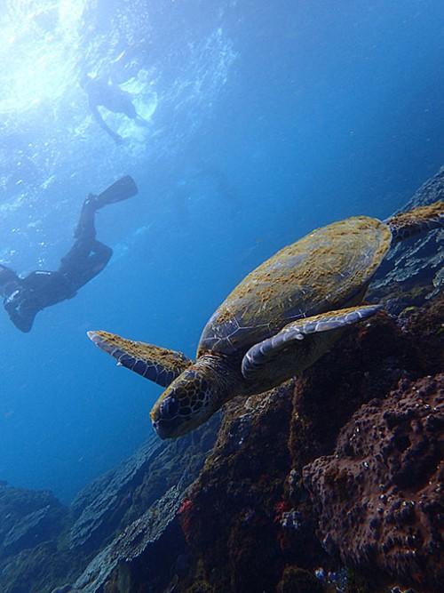 潜れるひとは潜ってウミガメ撮ってもみたり
