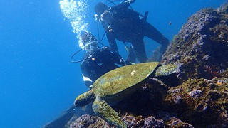 広がる青空も続いていた八丈島、凪いでる底土で体験ダイビング
