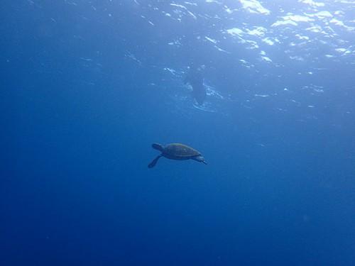 八重根の沖でカメを見て