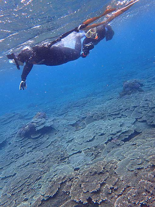 サンゴの海でシュノーケリング