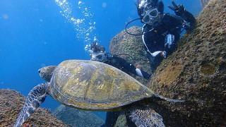 青空続く八丈島、凪ぎ間も続く八重根で体験ダイビング