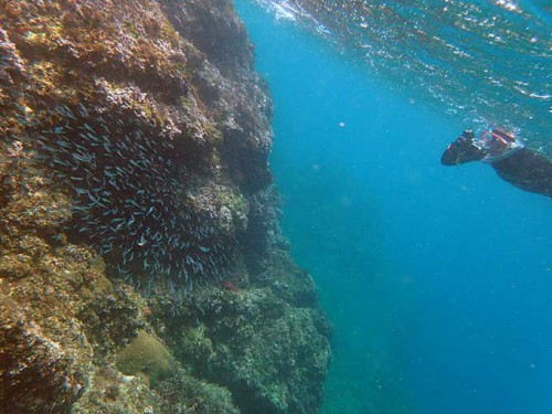 波打ち際には小さい魚が集まってたり