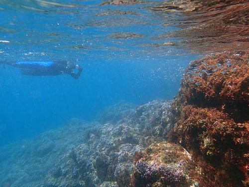 波打ち際には小さな魚がたくさんいたり