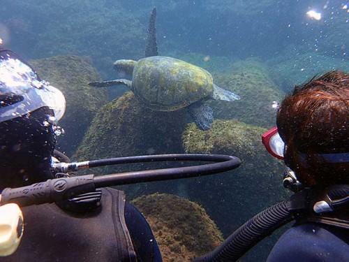 泳ぐカメの後姿を見てみたり